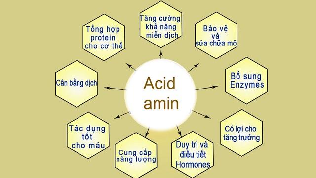 BCAA được hiểu là nhóm các axit amin thiết yếu của cơ thể.