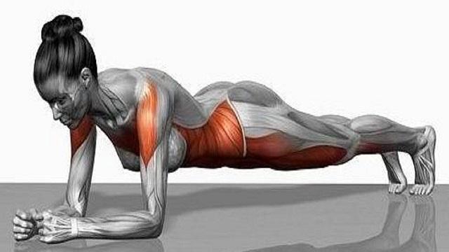 Plank tác động đến các nhóm cơ chính trên cơ thể