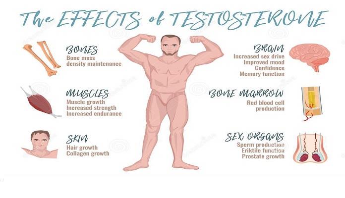 Testosterone chính là chìa khóa vàng quyết định thể chất cho phái mạnh