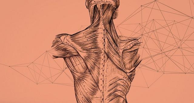 Casein giúp chống dị hóa cơ bắp